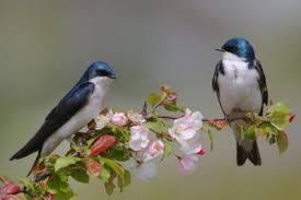 """Résultat de recherche d'images pour """"bon week end petit oiseaux"""""""
