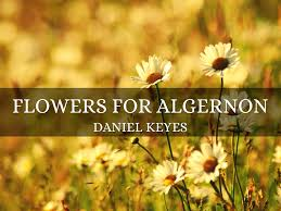 flowers for algernon questions pdf the best flowers ideas flowers for algernon short story questions and answers