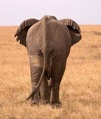 elephantsleave