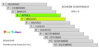Potentilla australis [Cinquefoglia del Trentino] - Flora Italiana