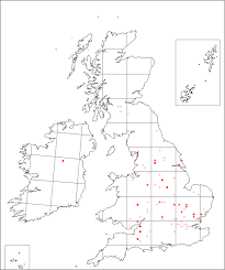 Asperula arvensis | Online Atlas of the British and Irish Flora