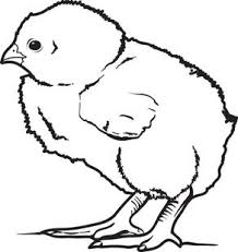 Small Picture chick coloring page chick coloring pages coloring page happy