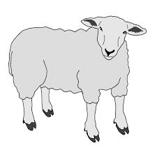 """Résultat de recherche d'images pour """"gif mouton"""""""