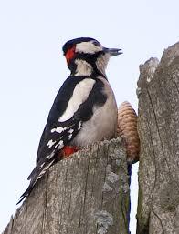 Птицы <b>зимнего</b> леса...: asaratov — LiveJournal