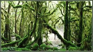 سحر غابة الامازون images?q=tbn:ANd9GcS