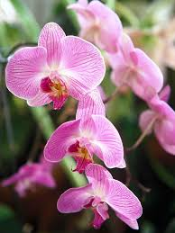 day orchid decor:  mwl