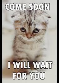 lonely cat - Imgur via Relatably.com