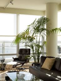 riverhouse living room contemporary open concept living room idea in new york amazing office plants