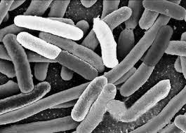 Resultado de imagen para celula