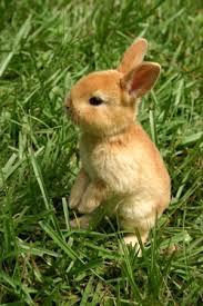 Résultat de recherche d'images pour 'images de lapins'