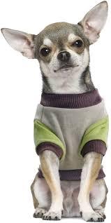 "<b>Толстовка для собак Triol</b> Disney ""Pluto College"", цвет: серый ..."