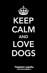 Выставка собак из приюта Keep calm and love dogs | ВКонтакте