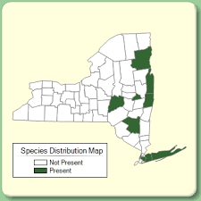 Silene dioica - Species Page - NYFA: New York Flora Atlas