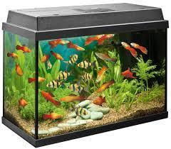 Image result for aquarium fish