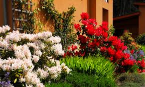 Image result for flowering shrubs