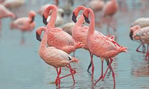 Sorry girls, but the <b>colour pink</b> doesn't exist and is just a pigment of our