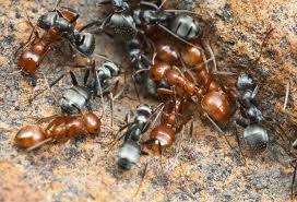 Résultats de recherche d'images pour «nid fourmis photo»