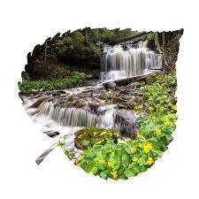 Loon Peak <b>Forest</b> Falls Aspen <b>Leaf Wall</b> Décor | Wayfair