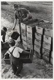 child labour early 20th century arthur rothstein child labor
