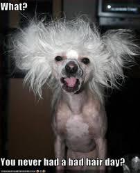 Bad Hair Day Meme   Slapcaption.com   We Heart It   dog via Relatably.com