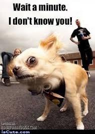 Suspicious Chihuahua Meme Generator - Captionator Caption ... via Relatably.com