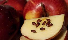 Resultado de imagen para manzana con sus semillas a la vista
