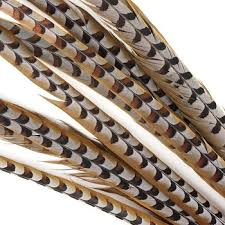 Factory Supply 100-110cm <b>Natural</b> Craft Reeves <b>Pheasant</b> Tail ...