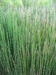 Puzzlegrass