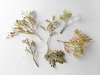 Растения: лучшие изображения (8) | Растения, Настенные вазы ...
