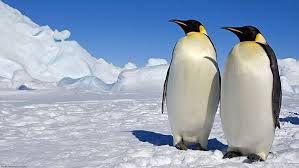 Lots and Lots of Playful Penguins - Cool, Cute and ... - Amazon.com