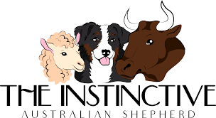 The Instinctive Australian Shepherd