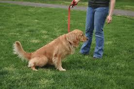 Как приучить собаку к туалету: полезные советы к действию