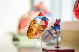 <b>Heart</b> failure | <b>Heart</b> Foundation