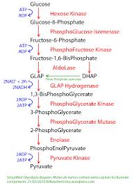 glycolysis   biochem co   biochem  amp  science notesoutline to glycolysis