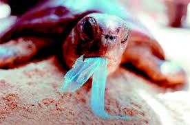 Resultado de imagem para sacolas plasticas