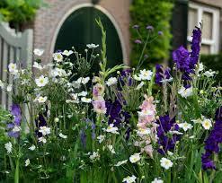 Gladiolus 'Purple Flora' (Sword-Lily)