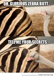 Image result for funny zebra