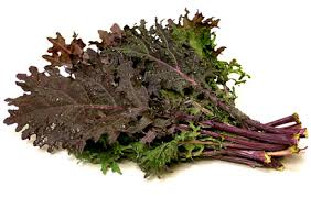Image result for red russian kale leaf
