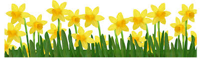Image result for easter daffodils