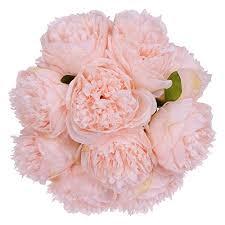 <b>Pink Flowers</b>: Amazon.com