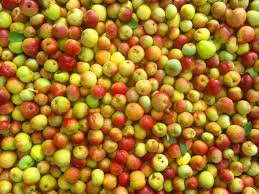 Image result for many apples