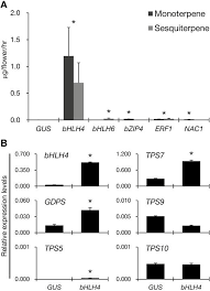 PbbHLH4 regulates floral monoterpene biosynthesis in ...