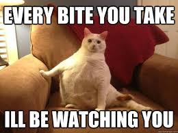 de fat cat memes | quickmeme via Relatably.com