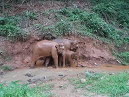 Toto <b>Elephant</b> Sanctuary