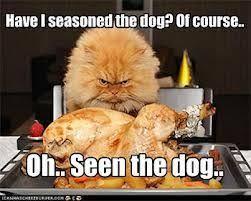 Evil cat meme | FUNNY STUFF | Pinterest | Evil Cats, Cat Memes and ... via Relatably.com