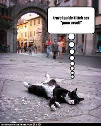 Image result for travel funnies