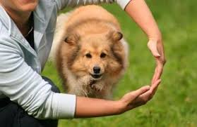 Image result for how to be the best dog trainer