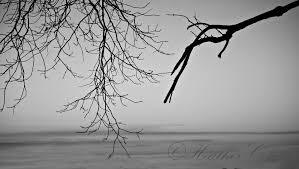 Image result for black and white branches