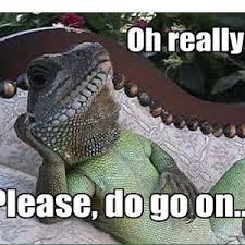 Uninterested Lizard Is Uninterested by ThomasGillen - Meme Center via Relatably.com
