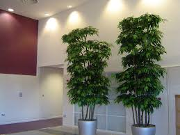 decorating ideas gallery artificial plants image of artificial plants and trees